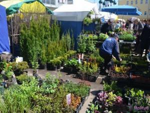 «Организация  Школы садоводов в Ярославле – путь к повышению качества жизни»